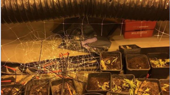 Politie vindt ontmantelde hennepplantage
