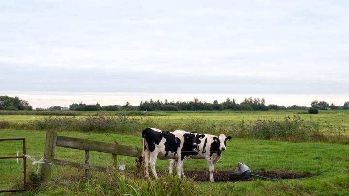 De Hegewarren tussen Grou en Oudega (Smallingerland).