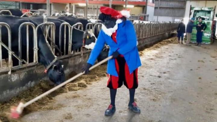 Swarte Pyt helpt een handje bij het aanvegen van de stalvloer.