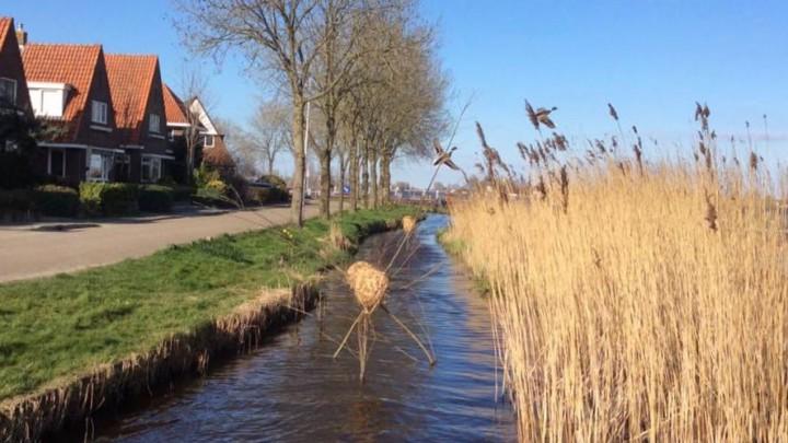De strook 'aangeslibd land' met rietgroei langs de Meersweg. (Foto: Tsjitske Knol)