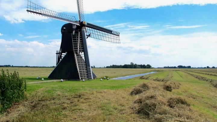 De Roekmole op Goaiingahuzen is de grootste spinnenkop van Friesland.