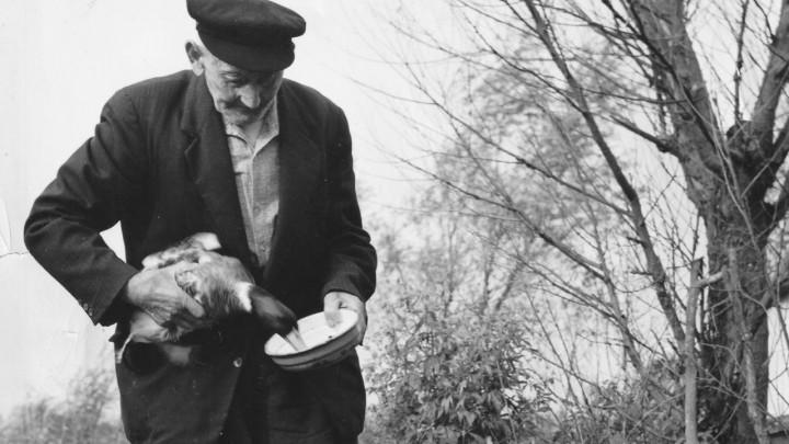 Freerk Siekmans voedert 'zijn' eenden. (Foto uit 1969 van F. Hoekstra)